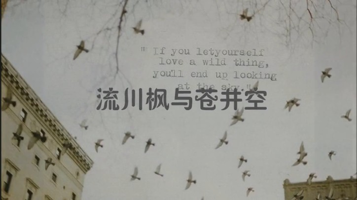 流川枫与苍井空